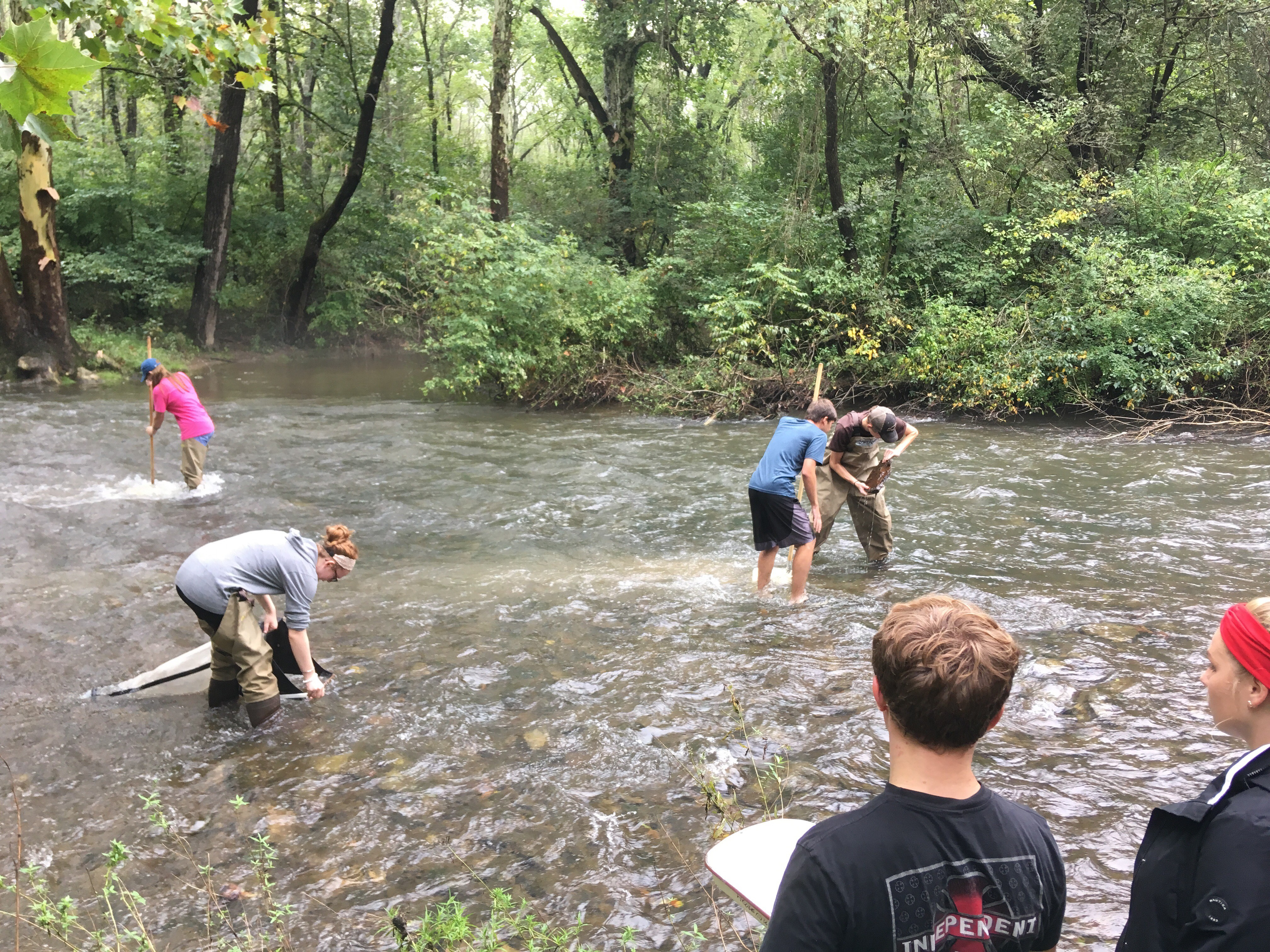 students wading in stream with nets and students standing on side of stream with notebooks