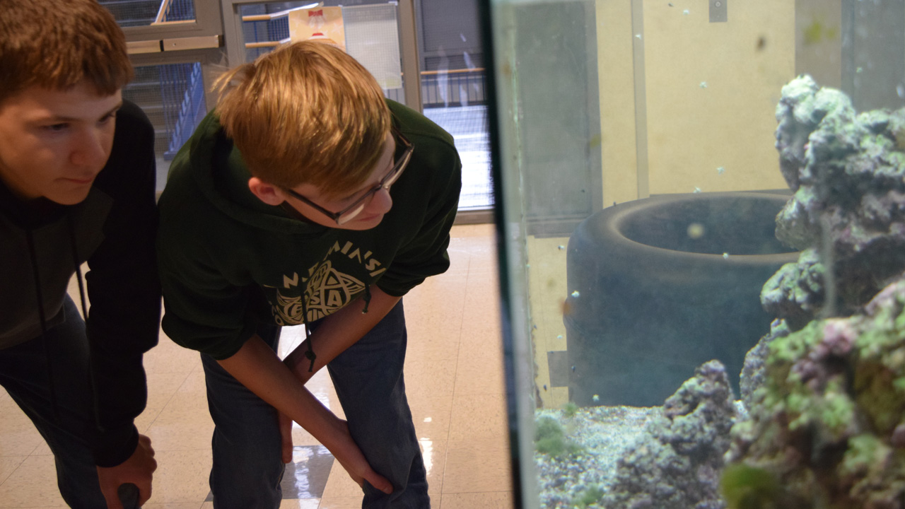 Scouts look at fish tank for oceanography merit badge.