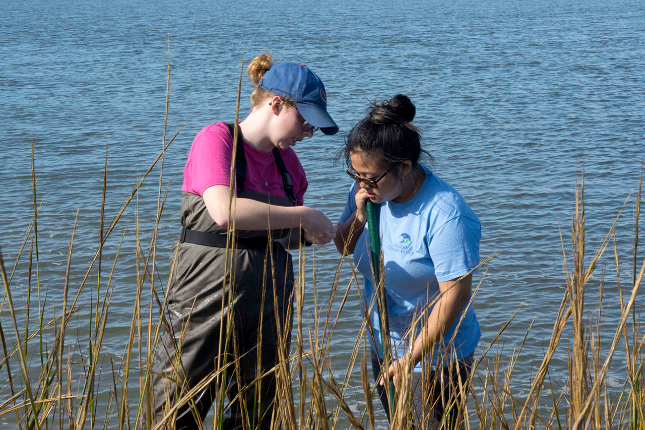Two students in waders in the salt marsh