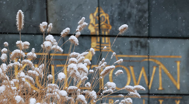 "The focus is on snow covered, dried ornamental grass in the lower left center portion of the picture. In the background is the slate Kutztown University campus sign. An outline of the bell tower in gold is visible, as well as the letters ""O""""W""""N."" The others letters are partially covered by the grass."