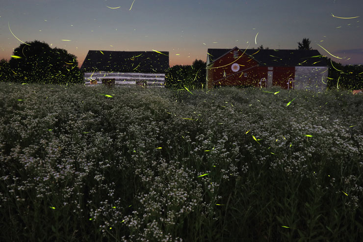Photo of the Pa German Cultural History Center. Log cabin on the left, barn on the right, wildflowers in the foreground with yellow of lightening bugs flying across the sky at dusk.