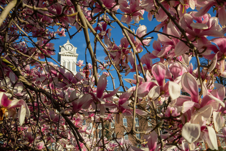 Spring Arrives on Campus