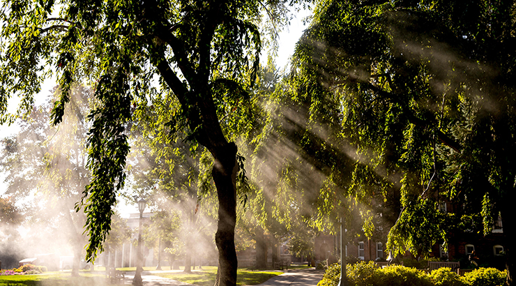 The late morning sun casts rays of light through the trees on north campus.