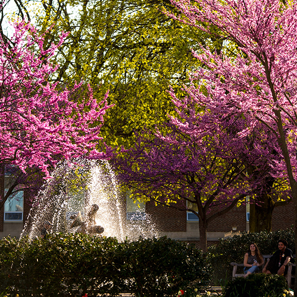 students sitting by fountain with spring trees blooming