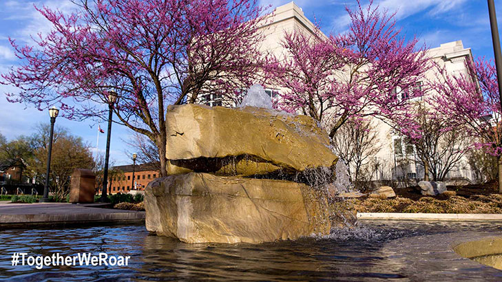 Bubbling rocks fountain pool on the alumni plaza surrounded by trees blooming pink blossoms in the spring