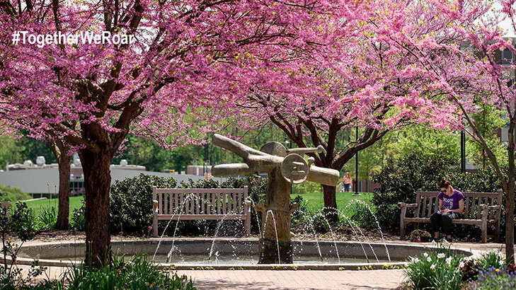 A water fountain on the DMZ surrounded by pink flowering spring trees while a female student sits on a bench reading a book