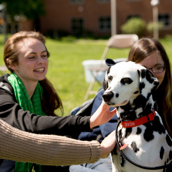 Students pet dog at Pet Therapy Day