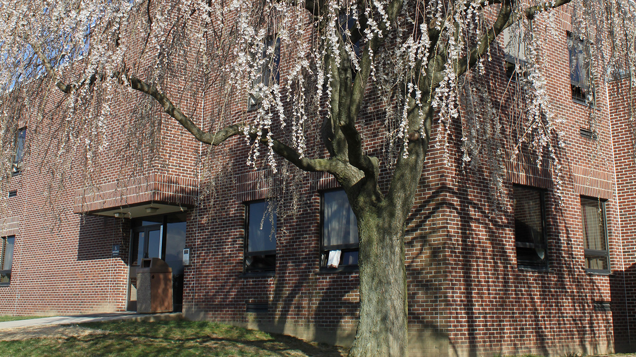Flowering tree in front of Lytle Hall